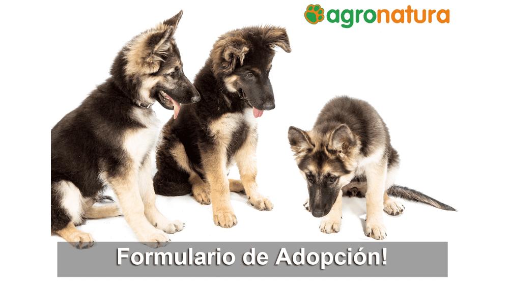 Formulario de Adopción de Mascotas Agronatura