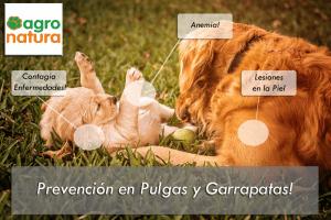 prevención-en-pulgas-y-garrapatas-tratamiento-para-perros