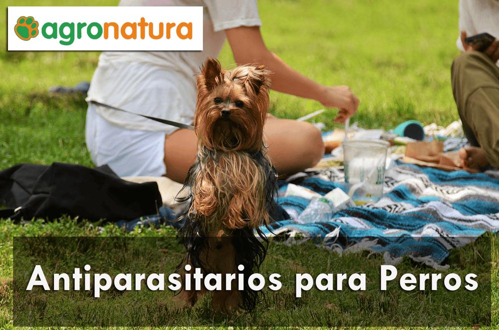 Antiparasitarios para Perros
