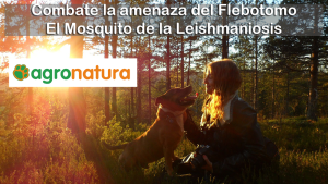 Combate la amenaza del mosquito de la leishmaniosis