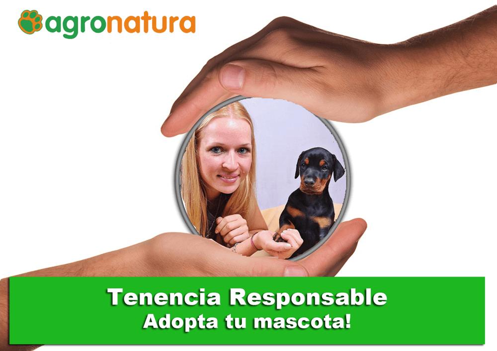 tenencia-responsable-adopta-tu-mascota