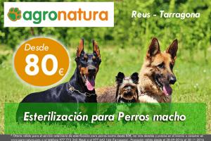 Esterilización para perros macho