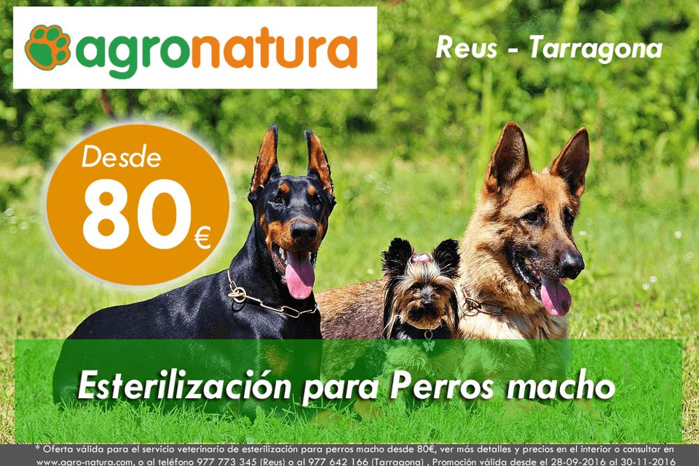 Esterilización para perros macho – oferta sep16