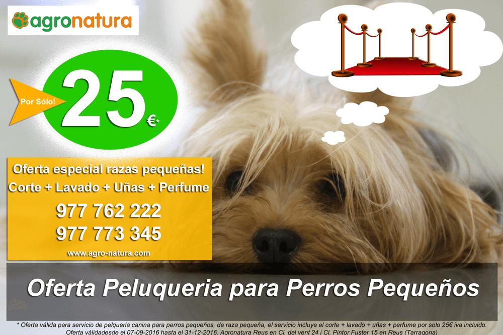 Oferta Peluquería para Perros pequeños -sep16