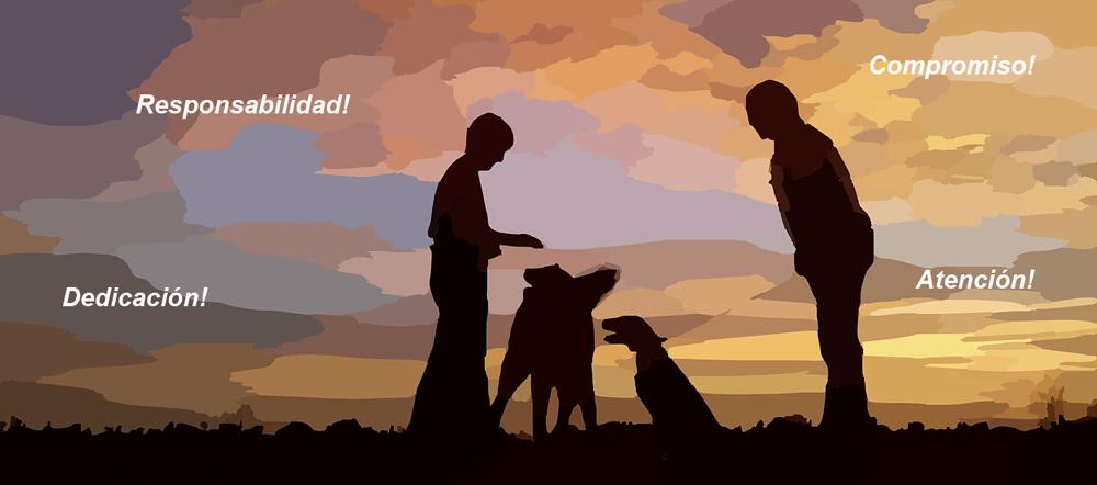 tenencia-responsable-adopcion-animales-2