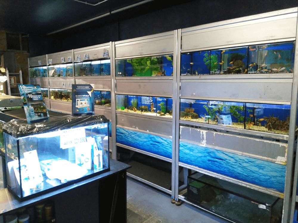 peces y acuariofilia