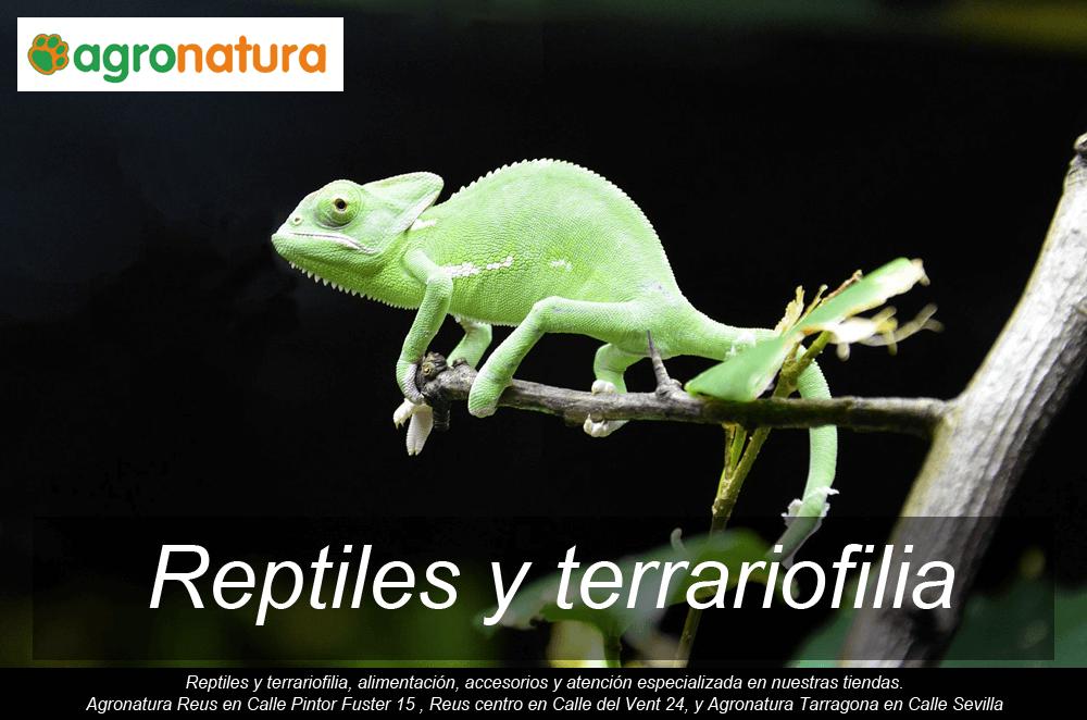 Reptiles y terrariofilia