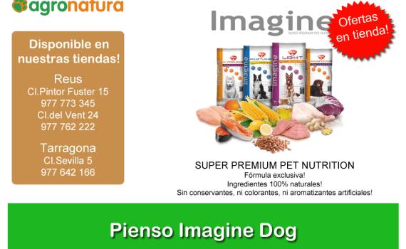 PIENSO-IMAGINE-DOG-DE-VISAN (2)