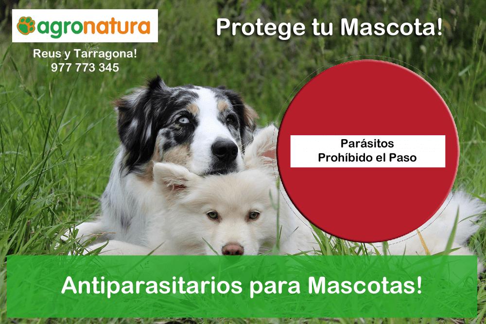 antiparasitarios para mascotas