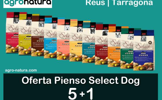 Oferta Pienso Select Dog 5+1