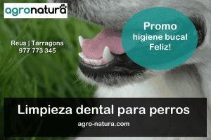 Limpieza dental para perros