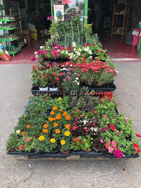 Tiendas de flores y plantas