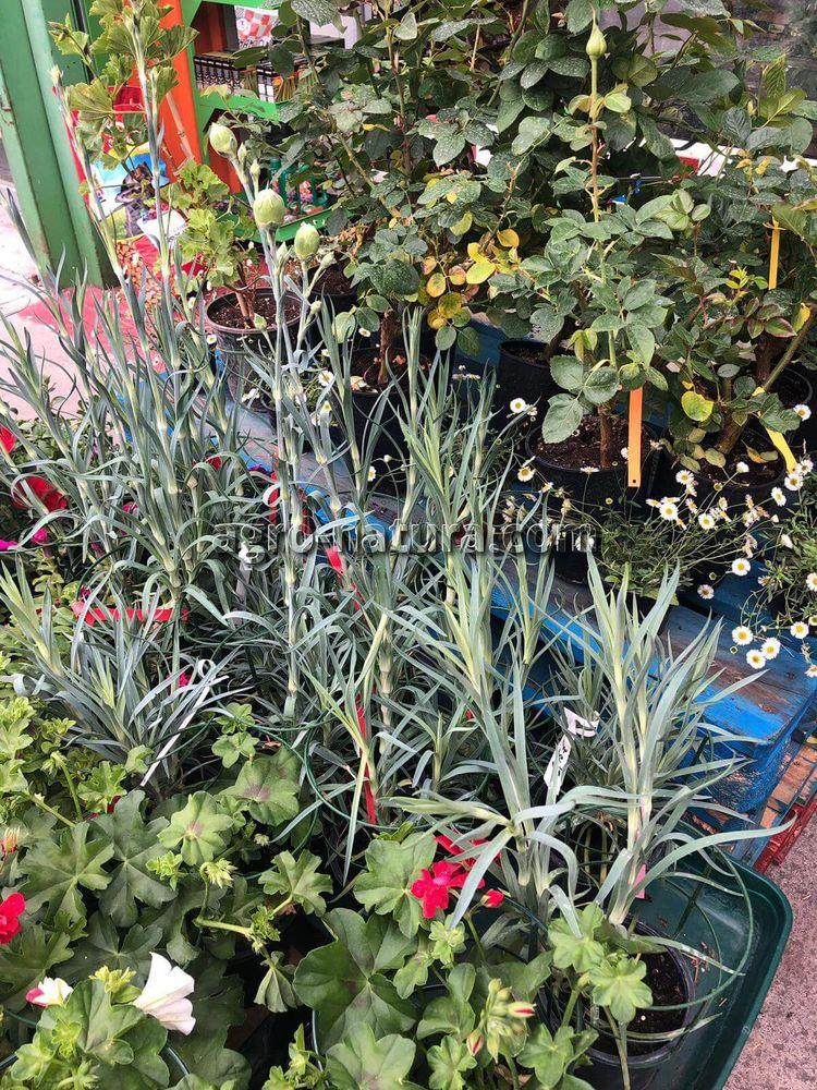 Tienda de flores y plantas