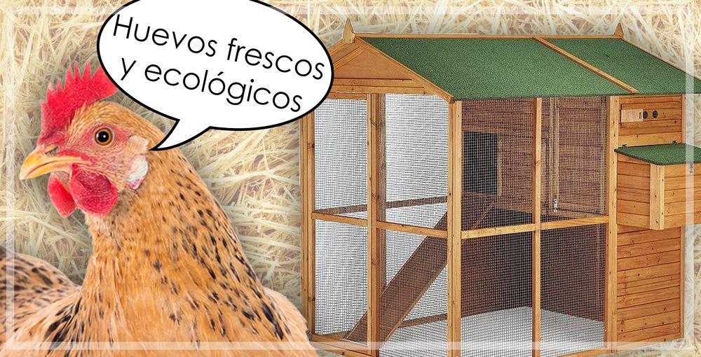 Huevos frescos y ecológicos desde casa