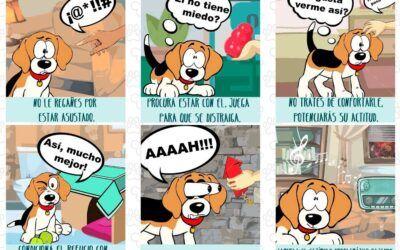 Fuegos artificiales y mascotas: qué hacer y cómo actuar