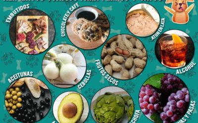 10 alimentos tóxicos para perros y gatos