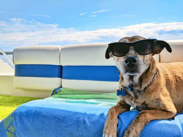 Golpe de calor en perros y como evitarlos