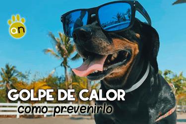 Golpe de calor en perros y cómo evitarlo