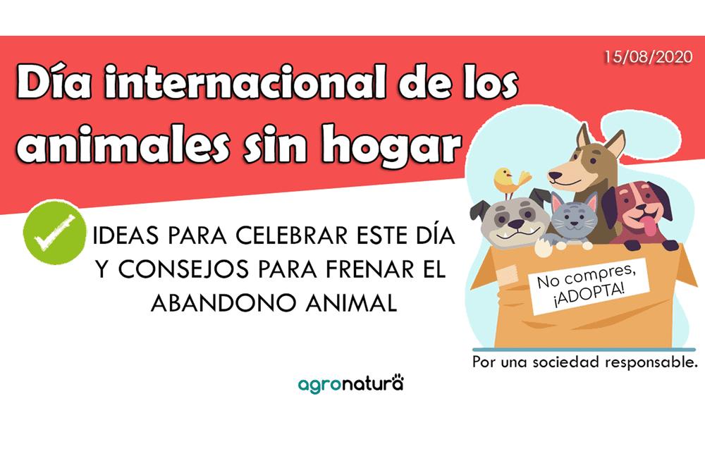 Día internacional del animal sin hogar 2020