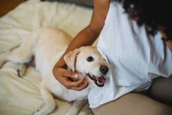 Higiene dental en perros
