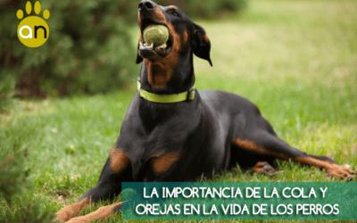 No le cortes las orejas ni la cola a tu perro