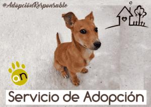 adopcion-agronatura-reus-