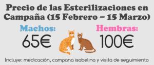 campaña-esterilización-gatos-y-gatas-agronatura-reus-625990079