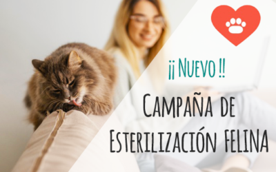 Campaña Esterilización Felina – Mejores precios