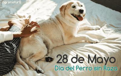 28 de Mayo – Día del Perro sin Raza