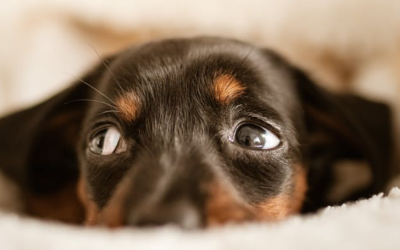 Consejos para nuestras mascotas y los petardos de San Juan