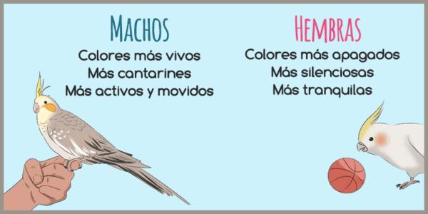 Diferencias entre los machos y las hembras en ninfas o carolinas