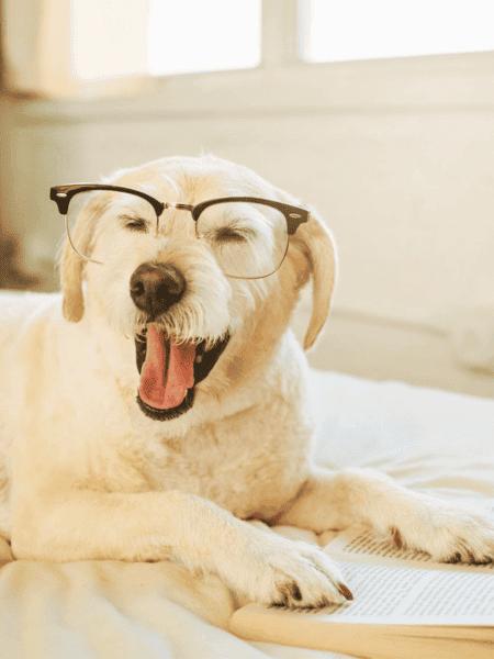 ¿Cómo hacer para que tu perro aprenda a jugar solo en casa?