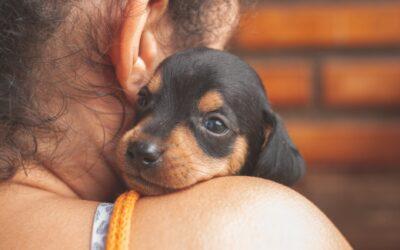 ANC Fresh | La mejor alimentación para perros en relación calidad-precio 2021